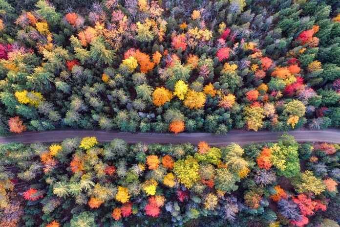 Wald Luftaufnahme Drohne