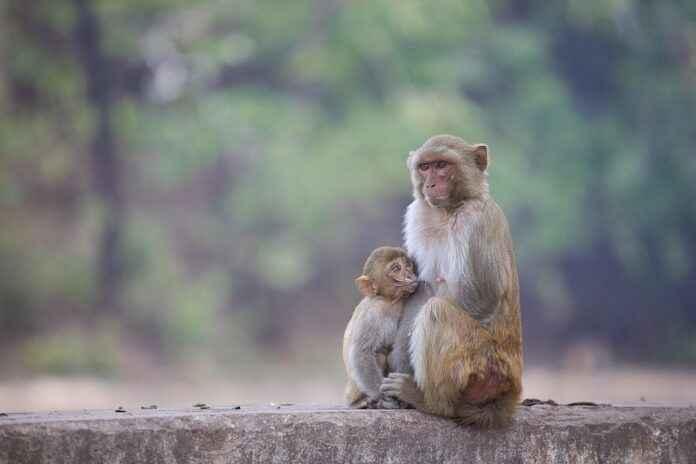 Affen Bildbewertung