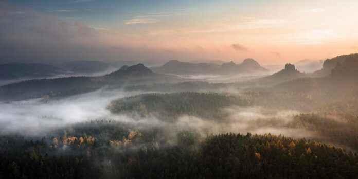 Nebel Herbst Wald