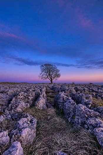 Baum blaue Stunde