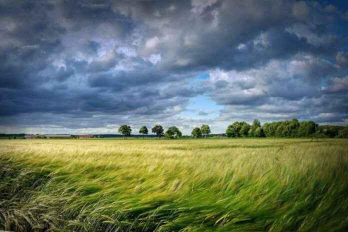 Himmel und Wind über Kornfeld