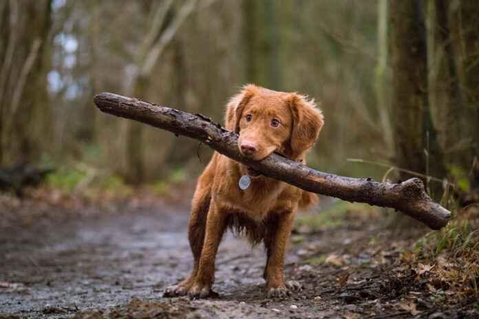 Hund mit Stock auf Augenhöhe Tierfoto Tier