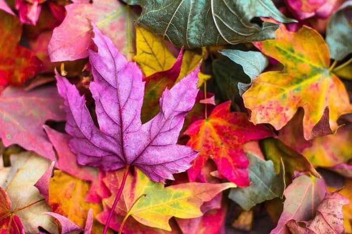 Waldboden Herbst fotografieren