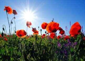 Blumen in Landschaft