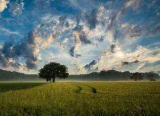 Landschaft Wetter Baum
