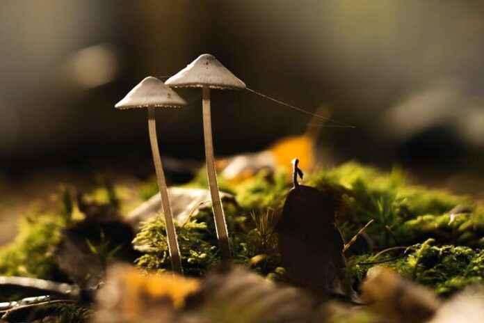 Pilze in Bodennähe fotografieren