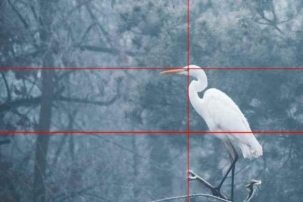 Drittelregel fotografieren lernen