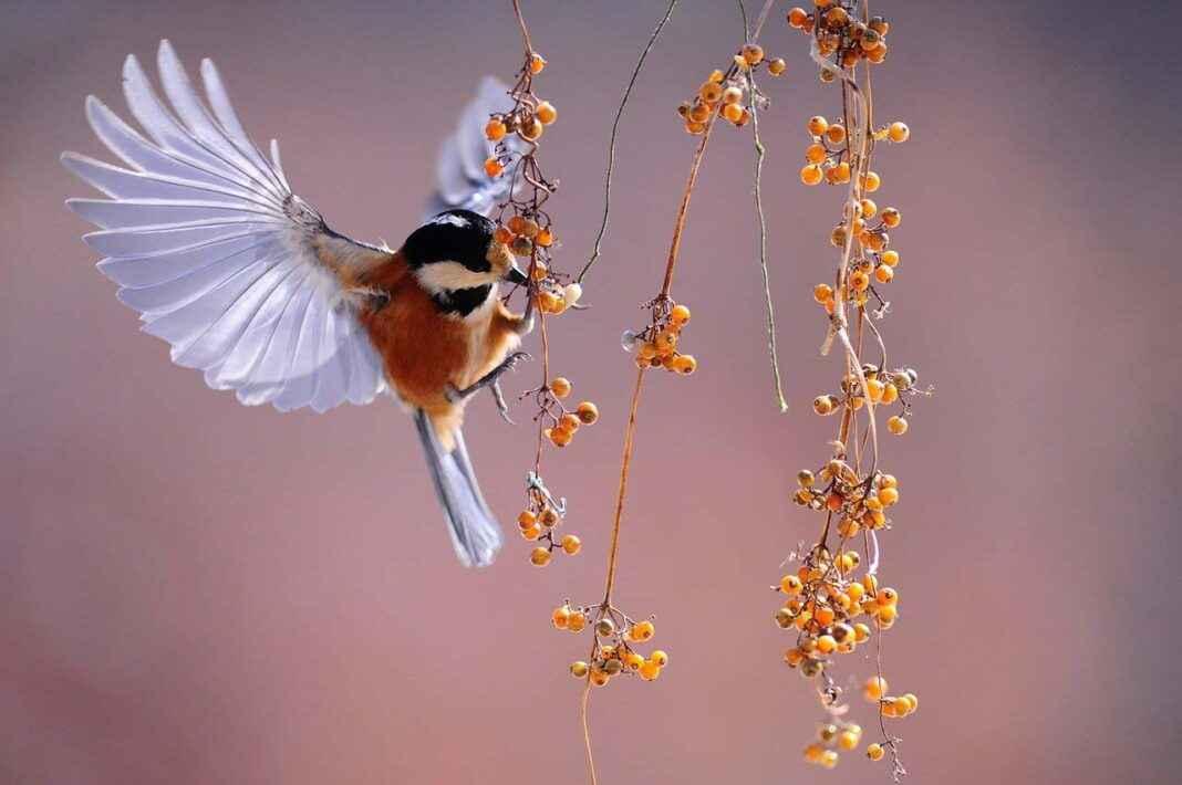 vogelfotografie Vögel fotografieren