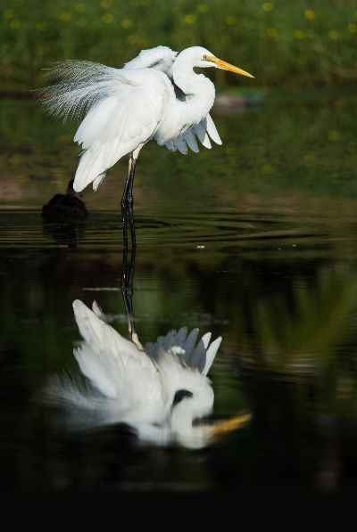 Vögel fotografieren