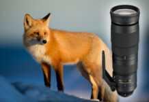 Wildlife-Fotografie Objektiv