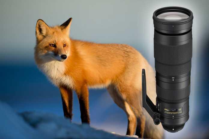 Objektive Wildlife-Fotografie